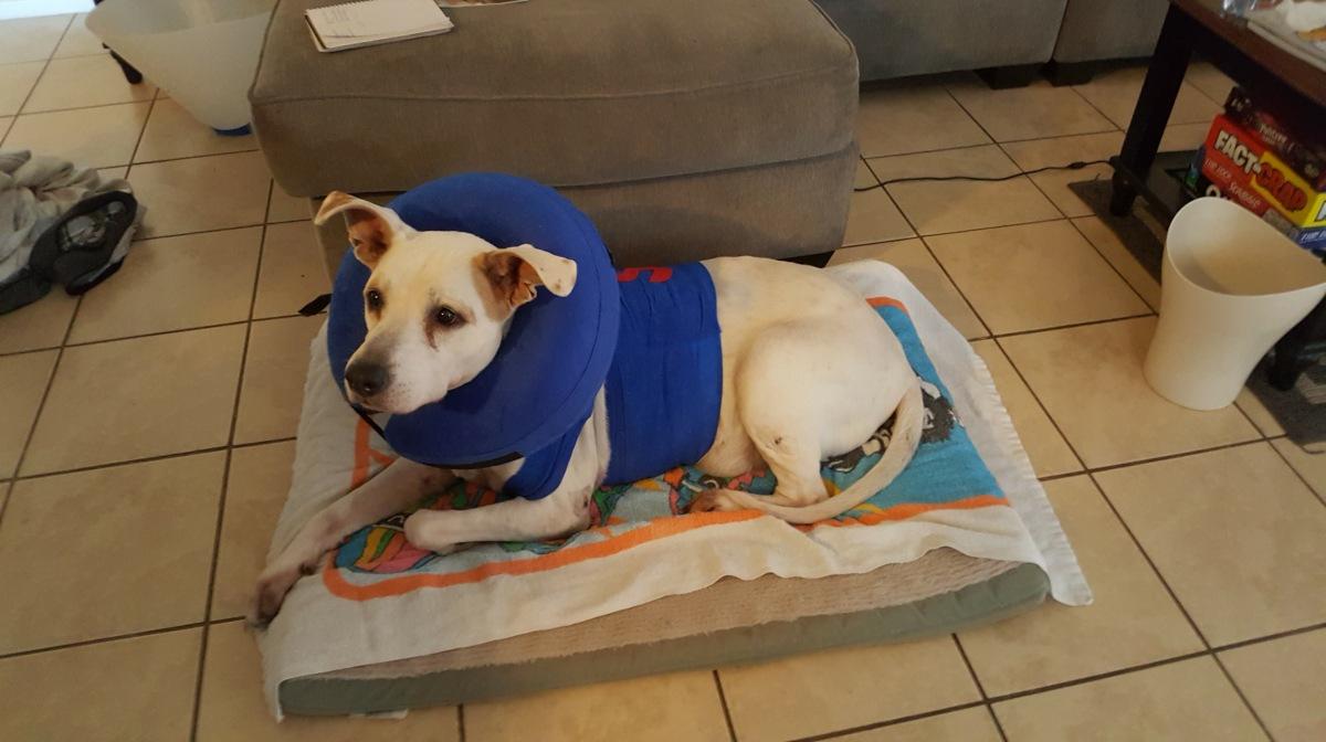 emergency vet visit my side of the pole